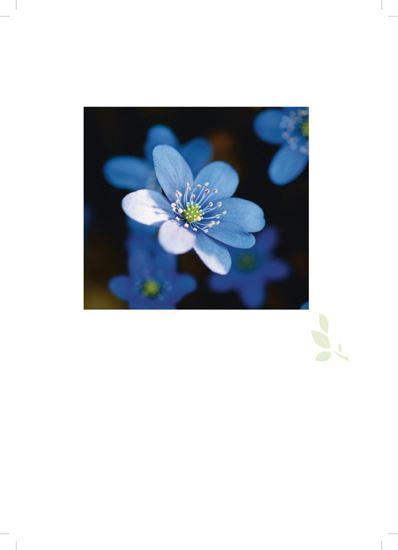 Bild på Omslag (4 s) för minnes och hyllningsblad, Blå blomma, Internationellt arbete