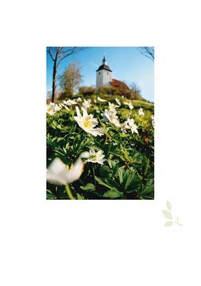 Bild på Omslag (4 s) för hyllningsblad, kyrka & vitsippor, Internationellt arbete