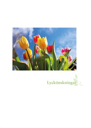 Bild på Hyllningsblad utlandskyrkan tulpaner